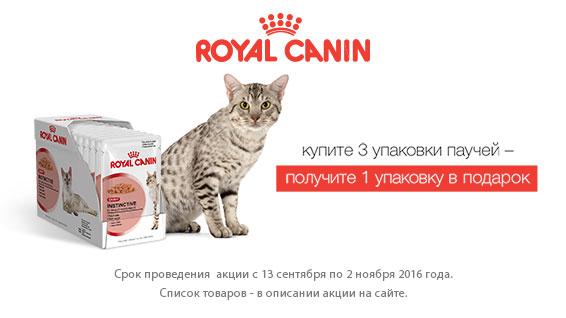 Ошеломительные скидки на консервы Royal Canin для кошек